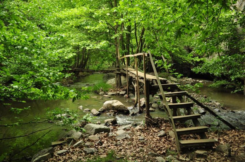 Bursa'nın biyolojik çeşitlilik envanteri çıkarılıyor