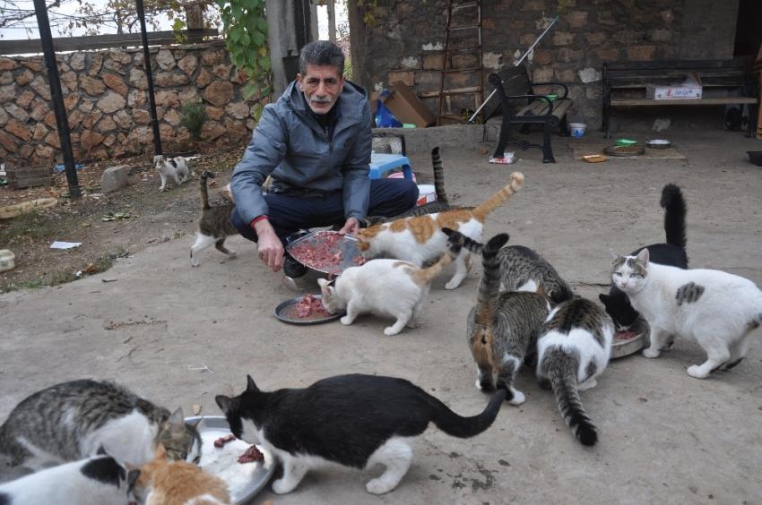 Kedilerin yolunu gözlediği muhtar
