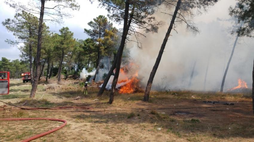 Arnavutköy'de ormanlık alanda yangın