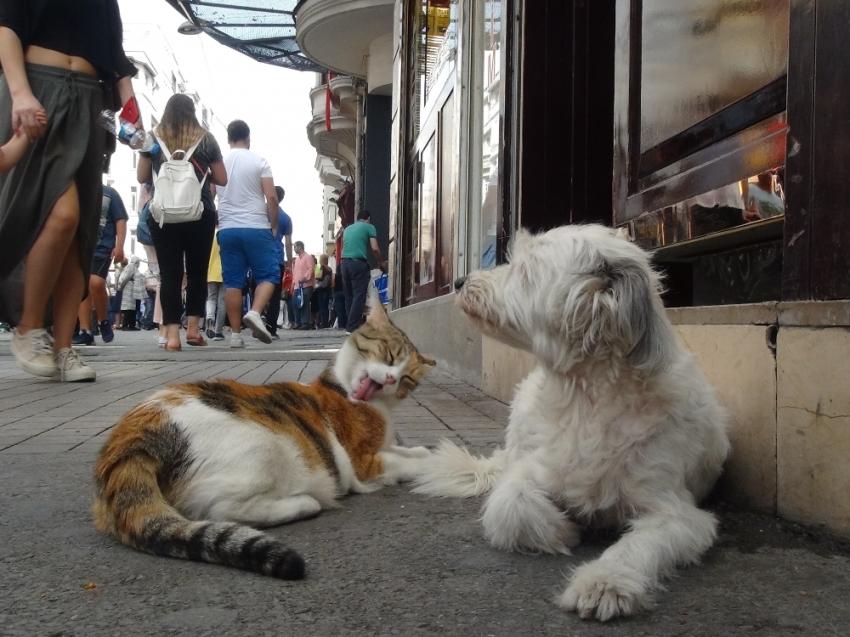 Taksim'de kedi ve köpeğin dostluğu görenleri şaşırttı