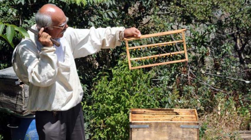 Arı sütünün kilosu 5 bin lira