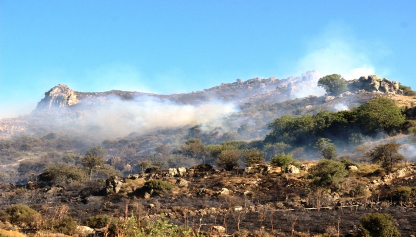 10 hektarlık alan kül oldu