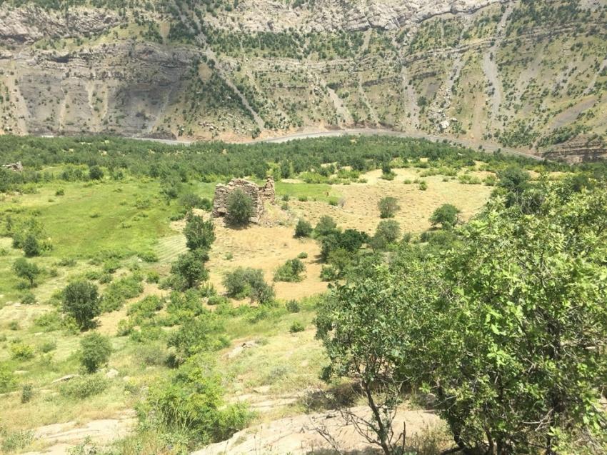 Terör yüzünden ekilemeyen araziler yeşillendi