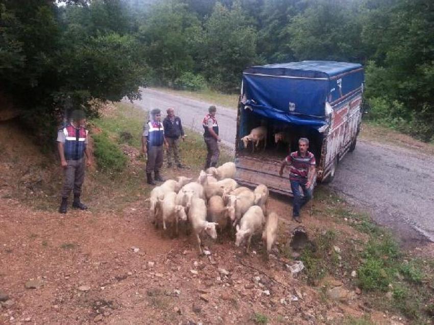 Bursa'da çaldılar İstanbul'da yakalandılar