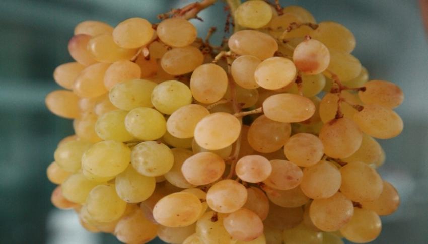 İstanbul'da zam şampiyonu 'yaş üzüm'