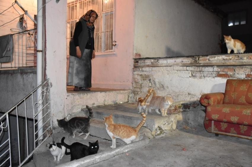 80 kediye annelik yapıyor