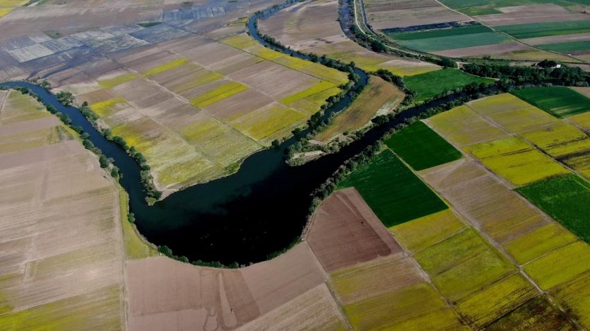 Bursa'da hasat öncesi tarlalar halı desenlerini aratmadı