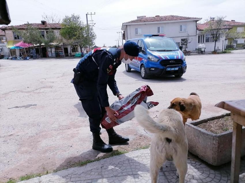 Jandarma ve polis sokak hayvanlarını unutmadı