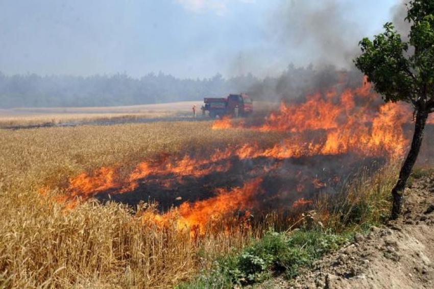 Tarım arazisindeki çıkan yangın ormanı da yaktı