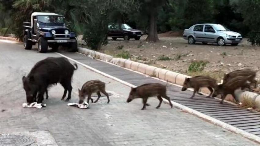 Gündüz vakti sokaklarda sürü halinde dolaştılar