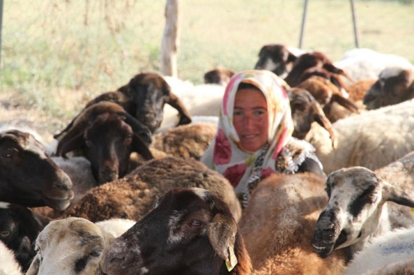 4 bin lira maaşla çoban aranıyor