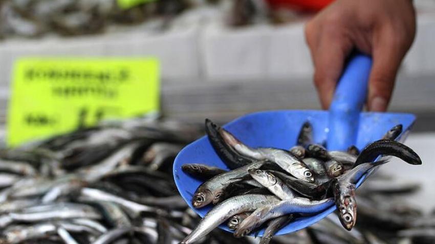 Kötü hava balık fiyatlarını 3'e katladı
