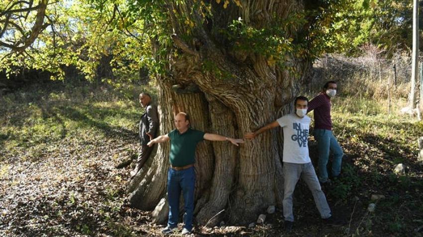Türünün en yaşlısı Türkiye'de