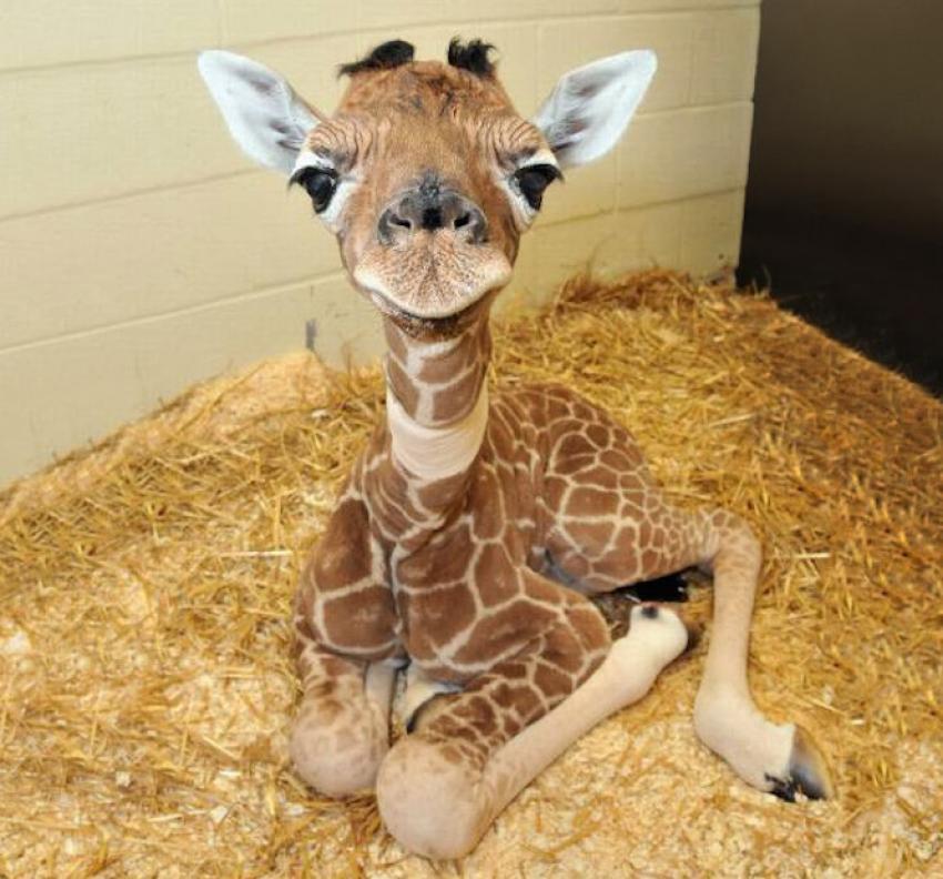 Dünyanın en ufak 11 hayvanı!