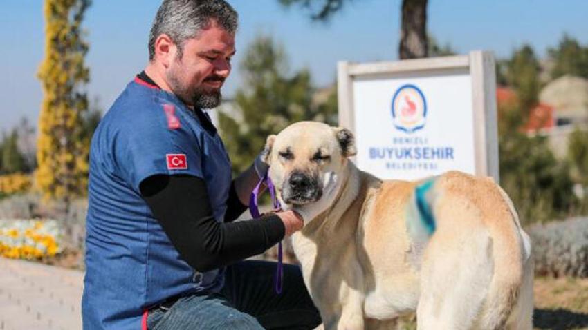 Kangal cinsi sokak köpeğinin karnındaki tümör, ameliyatla alındı