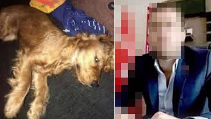 Emanet köpeğe cinsel saldırı