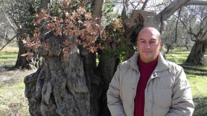 Asırlık zeytin ağacının gövdesi meşe ağacına yuva oldu