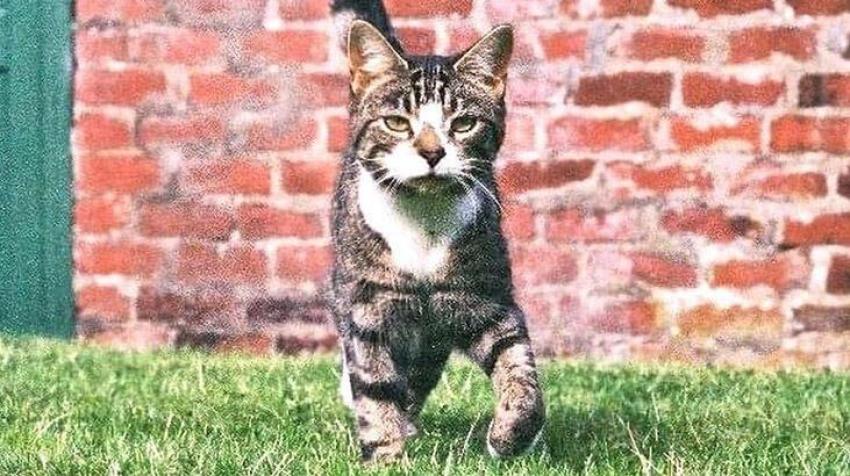 10 yıldır kayıp kedi evine geri döndü