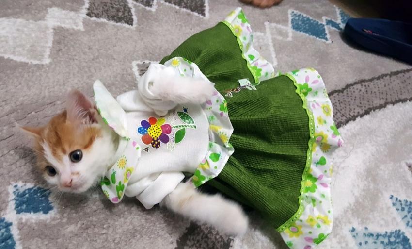 'Mısmıl' kedi kıyafetleri ile ilgi odağı oldu