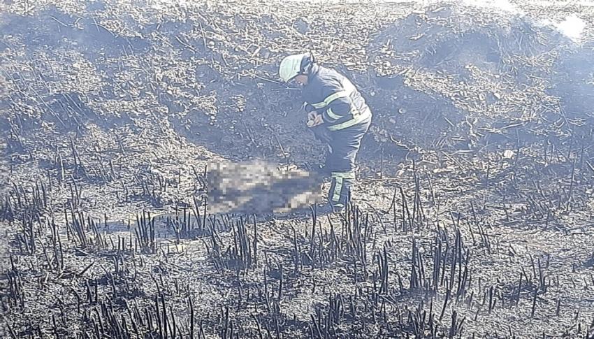 10 yavru köpek yangında telef oldu