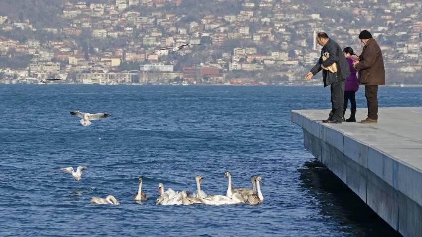 İstanbul Boğazı'nın yeni misafirleri