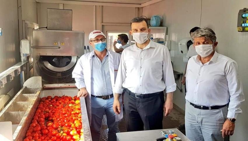 Bursalı domates üreticisine bir müjde daha