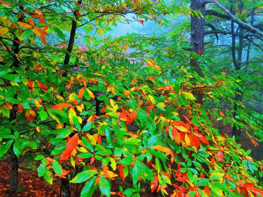 Kazdağları sonbahar renkleriyle göz kamaştırıyor