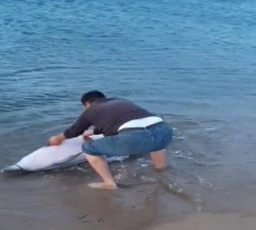 Sahile vuran yunus balığını kurtardı