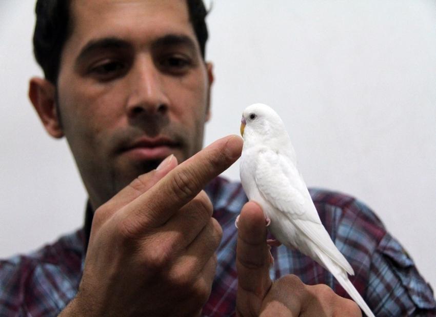 Bu kuş hem muhabbet hem dua ediyor