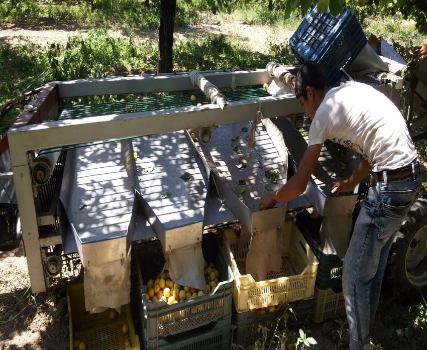 Kayısı üreticilerinin işini kolaylaştıracak makine