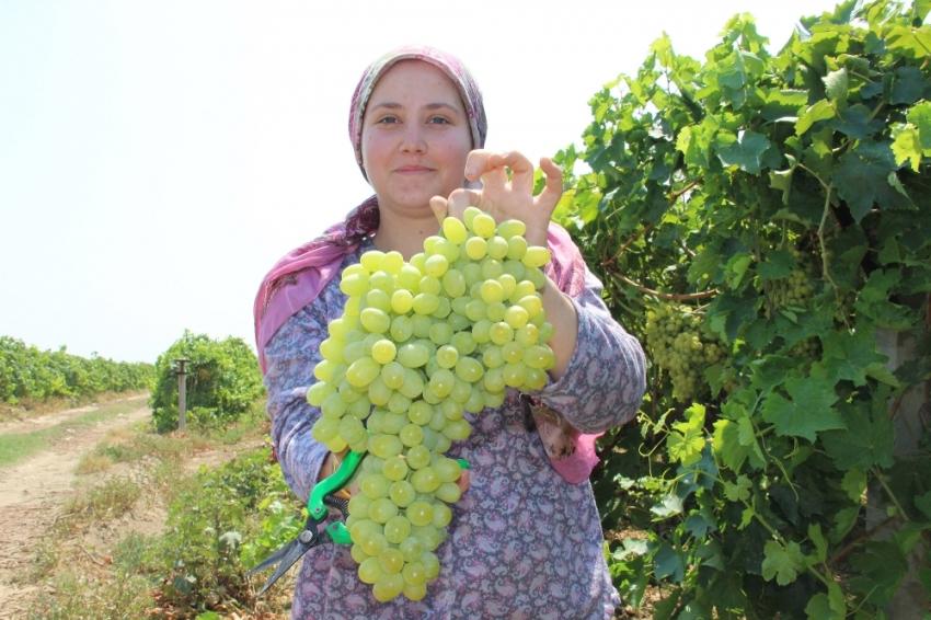 Rusya kapıları açtı üzümde ihracat arttı