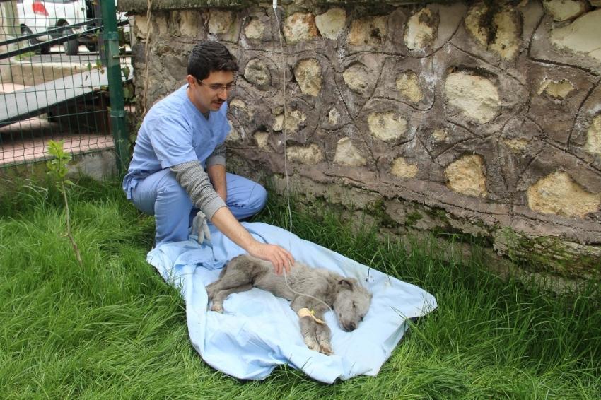 Ölmek üzereyken bulunan köpeğe Mehmetçik şefkati