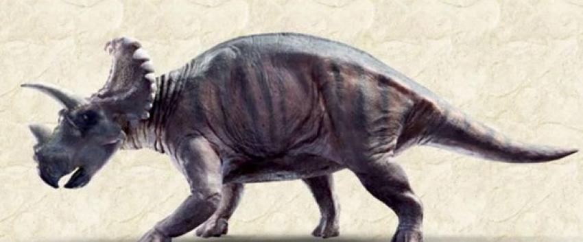 Tam 79 milyon yıllık!