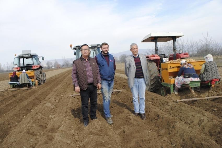 Bursa'da patates ekimi başladı