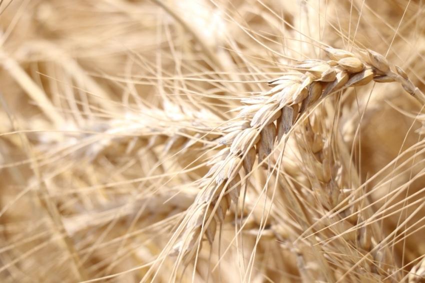 Tarımda sigortalı varlık değeri yüzde 28 arttı