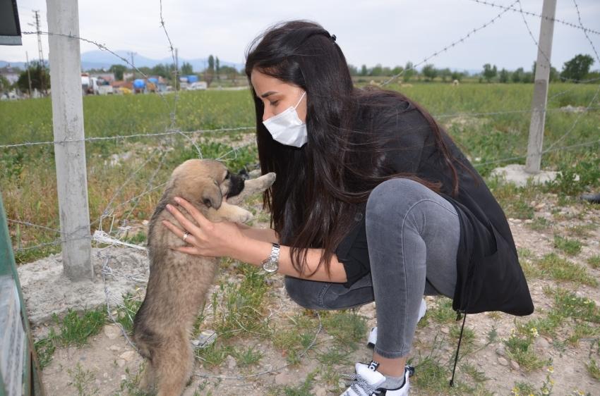 Gönüllü gençlerden sokak hayvanlarına şefkat