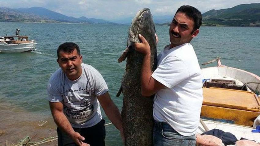 80 kiloluk balığı oltayla yakaladı