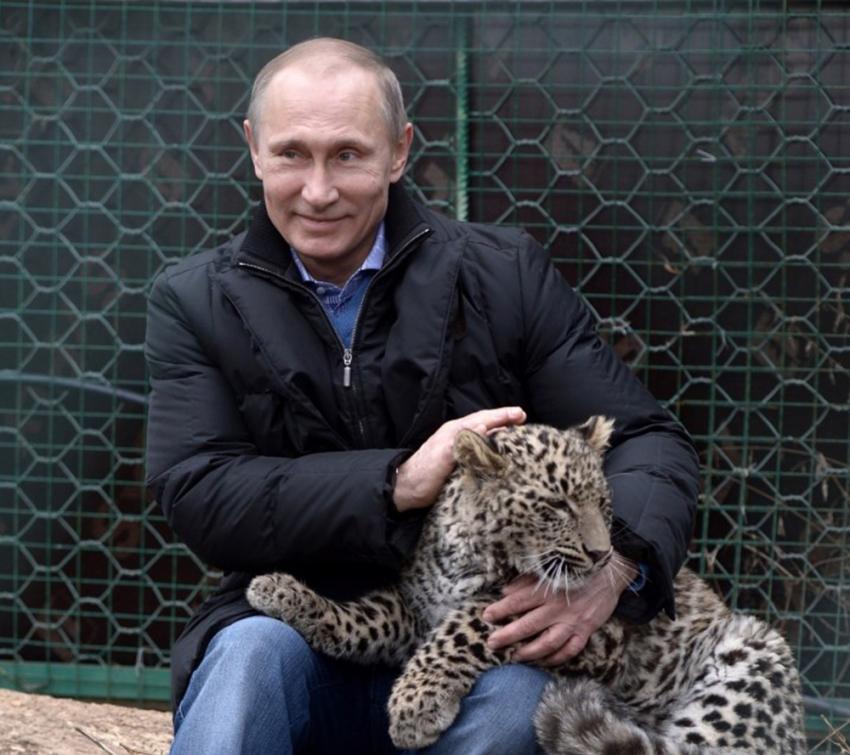 Putin'in leoparı Abhazya'da yakalandı