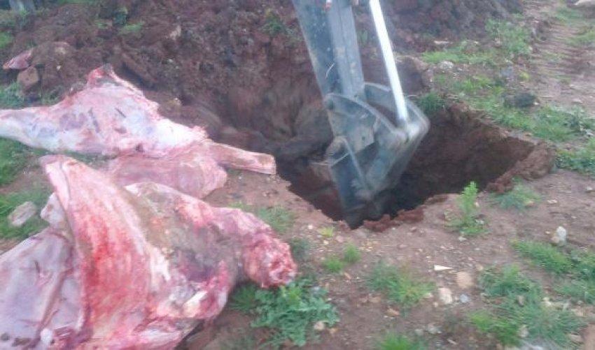 700 kilo et imha edildi