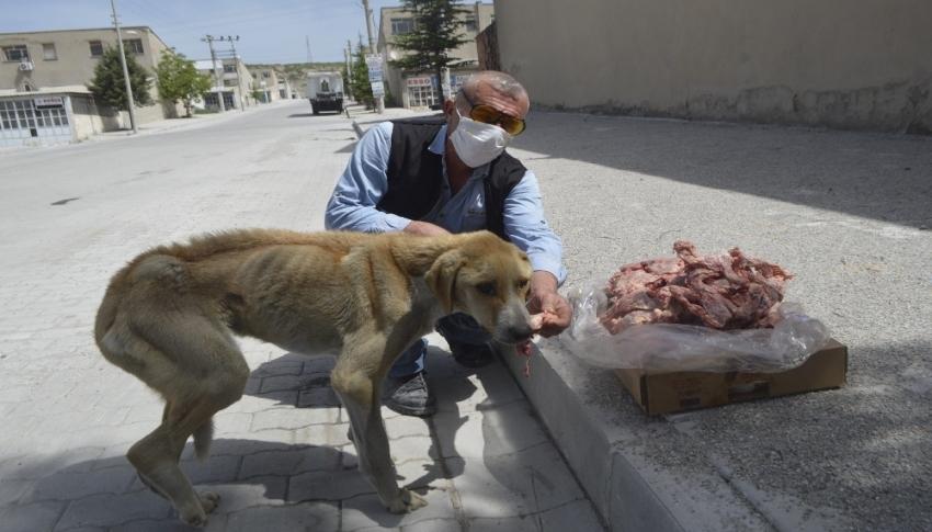 Açlıktan ölmek üzere olan hasta köpek barınağa teslim edildi