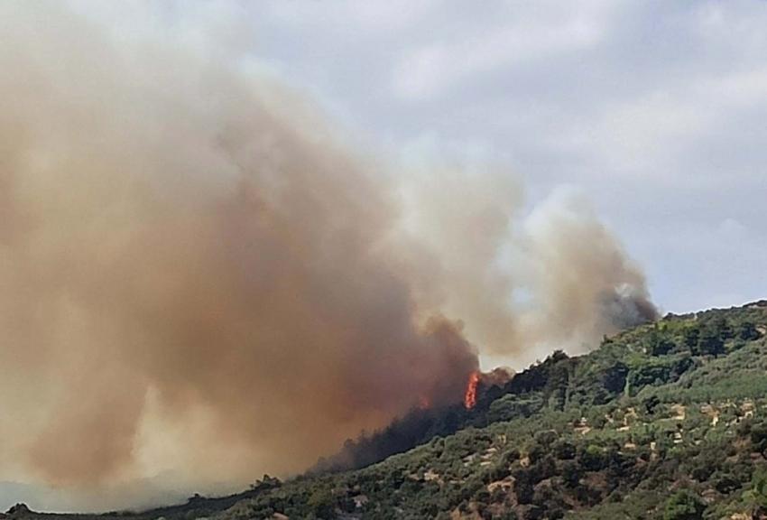 Bursa'da arıları tütsülerken ormanı yaktı