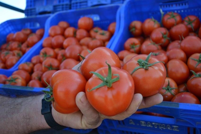 Rusya, Türk domatesini yine geri gönderdi