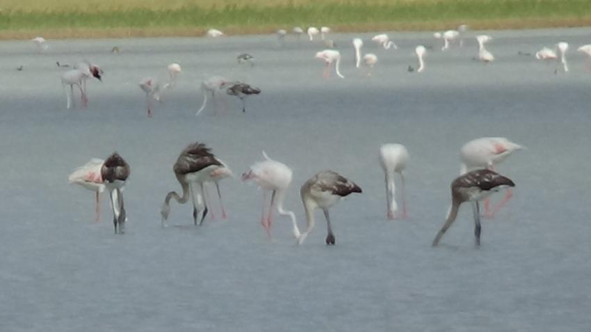 Kuruyan göl, kuş cenneti oldu