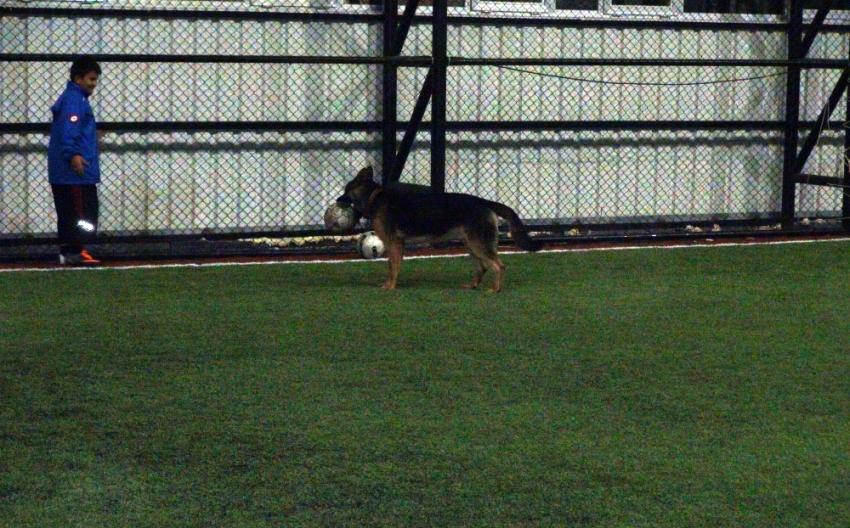 Bu köpek futbol tutkunu