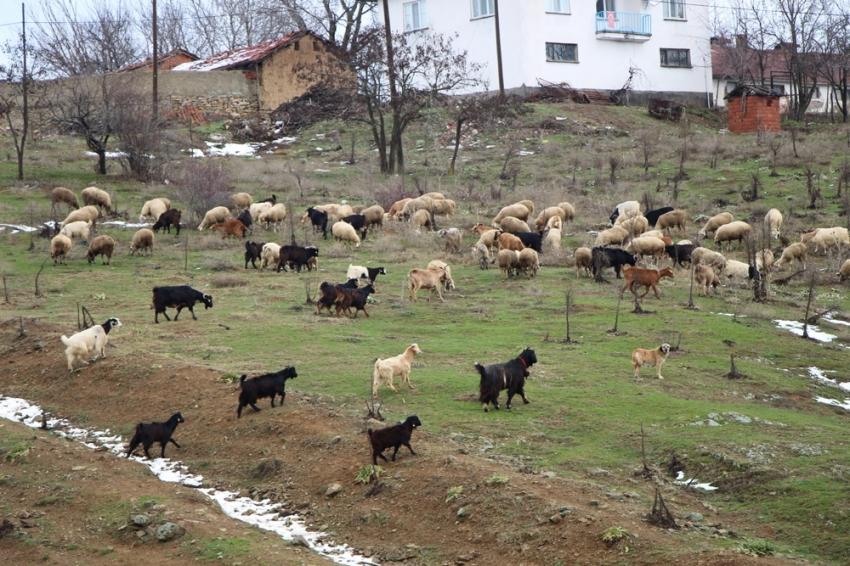 Çobanların zorlu kış mesaisi başlıyor