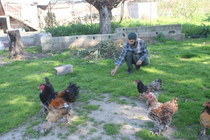 Yumurtası 400, civcivi 1000 lira
