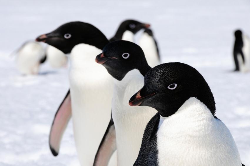 14 bin yıldır Antartika'dalar