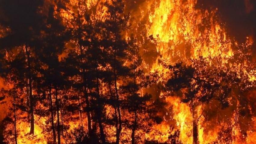 Bursa'da da orman yangını planlayan iki terörist yakalandı