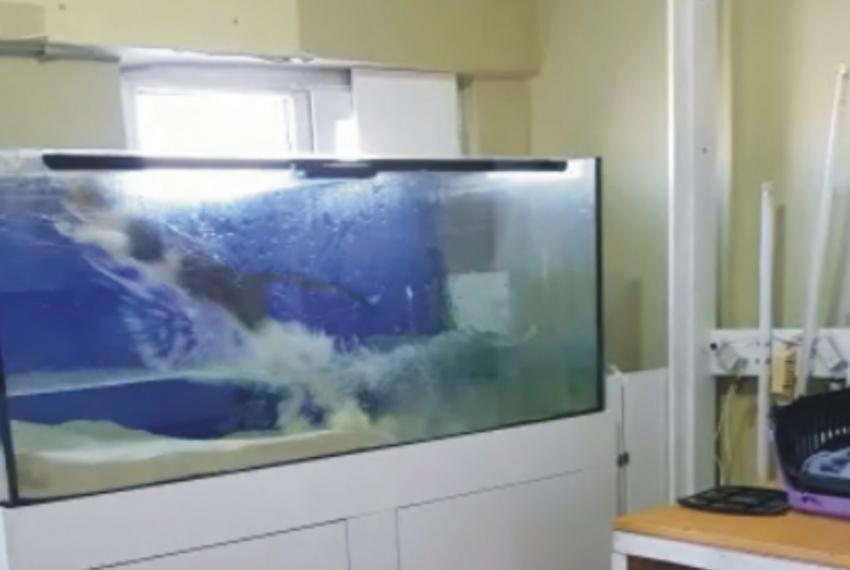 Sineği yakalamak isterken akvaryuma düştü