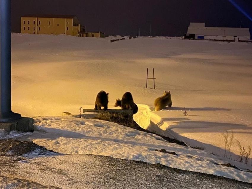 Kış uykusundan uyandılar, ilçe merkezine indiler